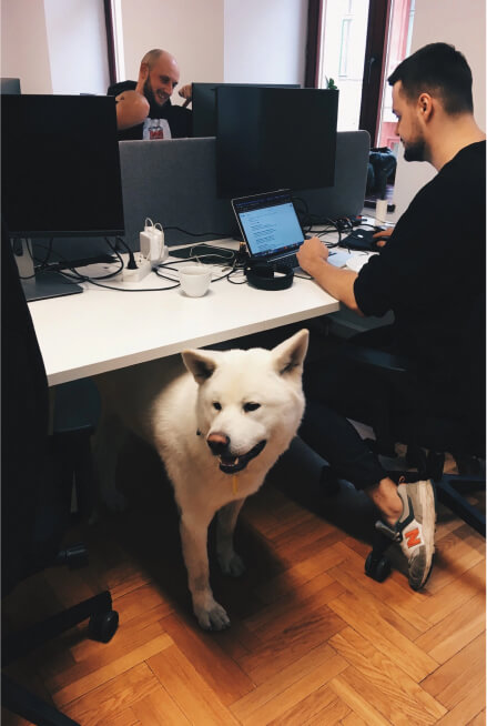 The dog in the office